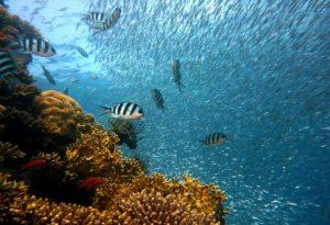 plongée sous marine, julien manival